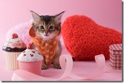 Valentine Kitten